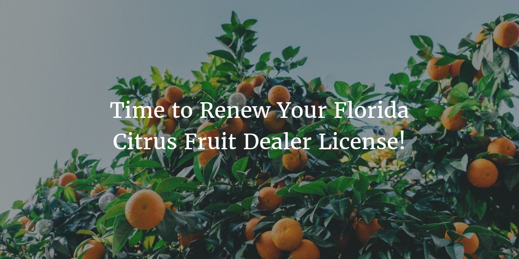 July 31 Florida Citrus Fruit Dealer License Renewal Deadline