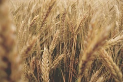 grain commodity bonds
